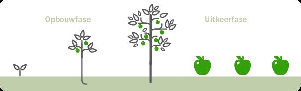 Opbouwfase groeiende boom Uitkeerfase appels