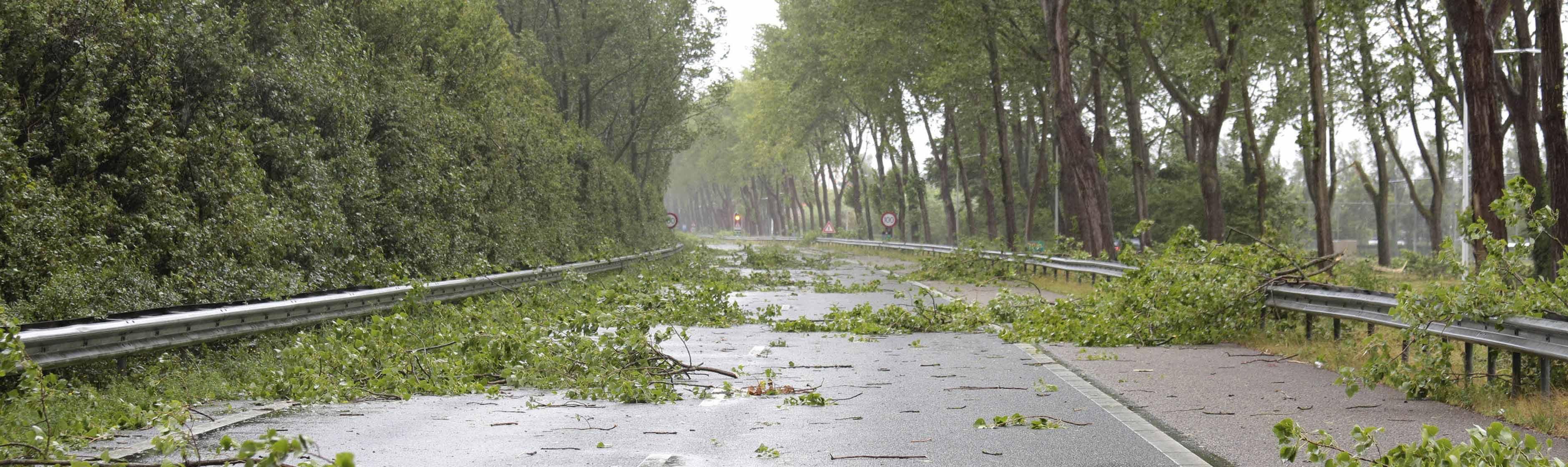 Bomen op de weg door storm