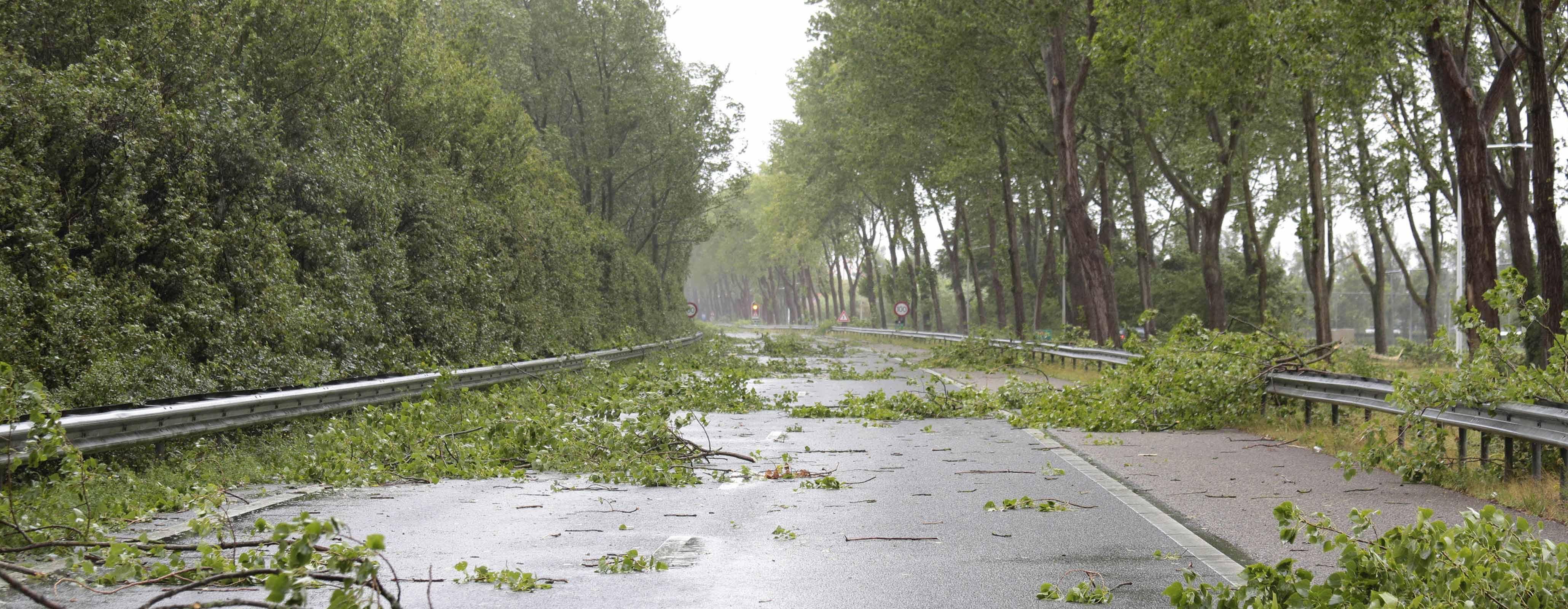Takken op de weg door storm