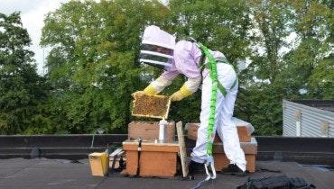 Bijenkast bij uw bedrijfspand. De imkers van de Bijzaak regelen alles. Het plaatsen op het dak en het onderhoud. | Ondernemerswinkel